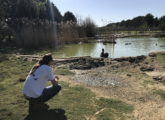 The Waterfowl Sanctuary